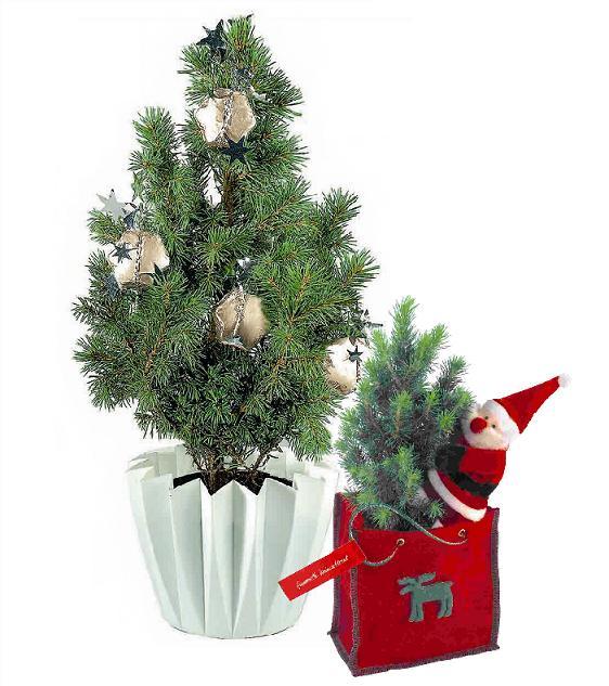 Weihnachtsbäume als Werbemittel
