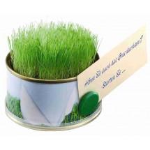 Minigarten Gras mit Magnet