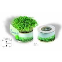 Minigarten Kräuter mit Magnet