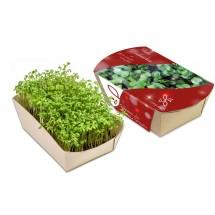 Microgreens-Gärtchen - Kresse