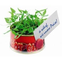 Minigarten Hot mit Magnet